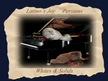 Latino Persians cattery